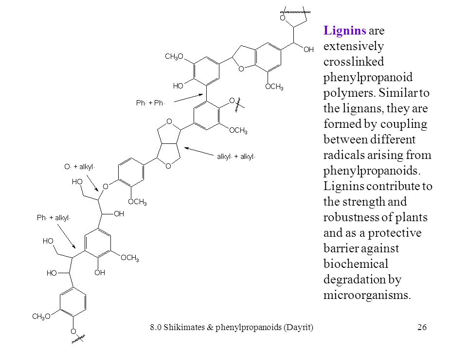 8.0 Shikimates & phenylpropanoids (Dayrit)26 Lignins are extensively crosslinked phenylpropanoid polymers. Similar to the lignans, they are formed by