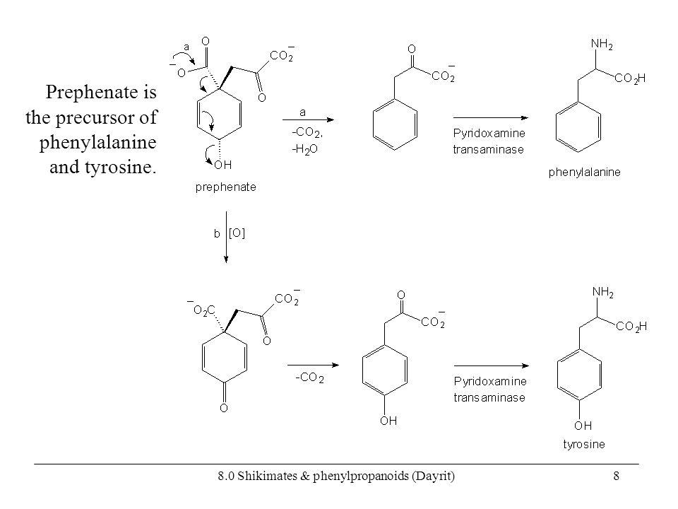 8.0 Shikimates & phenylpropanoids (Dayrit)8 Prephenate is the precursor of phenylalanine and tyrosine.