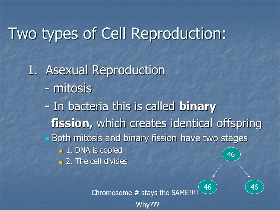 Two types of Cell Reproduction: Two types of Cell Reproduction: 1.
