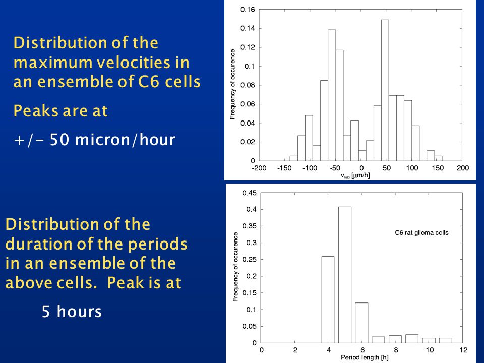 Distribution of the maximum velocities in an ensemble of C6 cells Peaks are at +/- 50 micron/hour Distribution of the duration of the periods in an ensemble of the above cells.