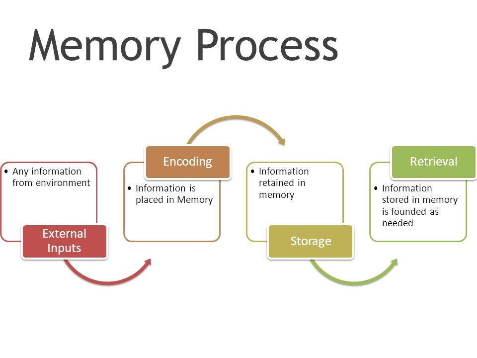 Memory Process Any information from environment External Inputs Information is placed in Memory Encoding Information retained in memory Storage Information stored in memory is founded as needed Retrieval