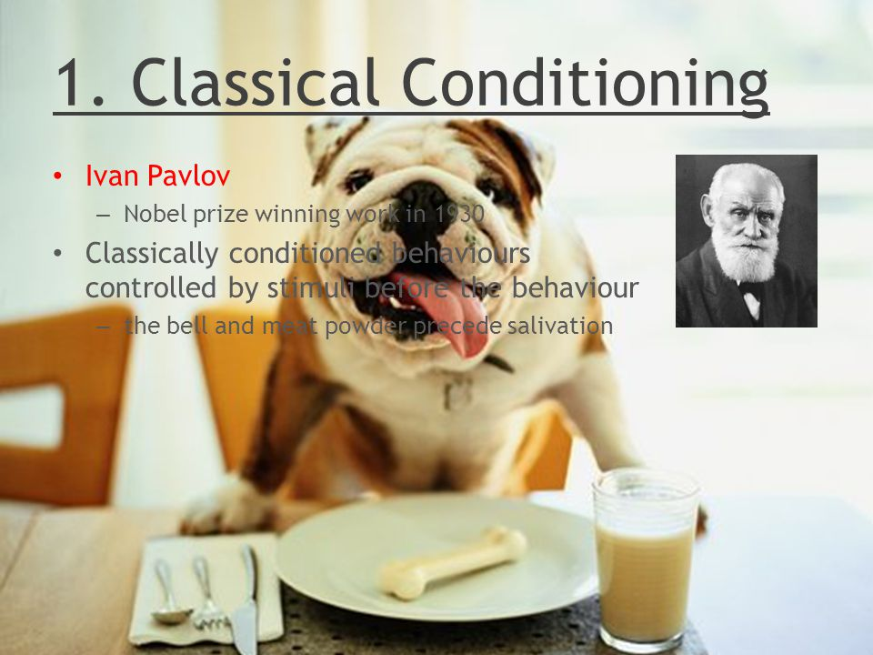 1. Classical Conditioning Ivan Pavlov – Nobel prize winning work in 1930 Classically conditioned behaviours controlled by stimuli before the behaviour