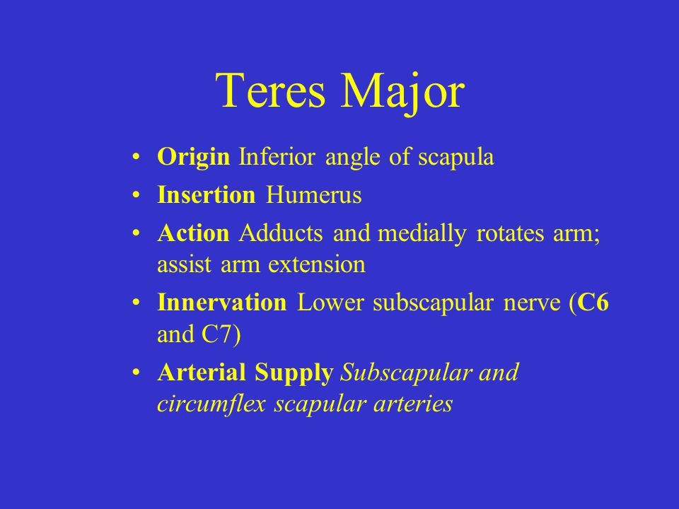 Teres Major Origin Inferior angle of scapula Insertion Humerus Action Adducts and medially rotates arm; assist arm extension Innervation Lower subscap