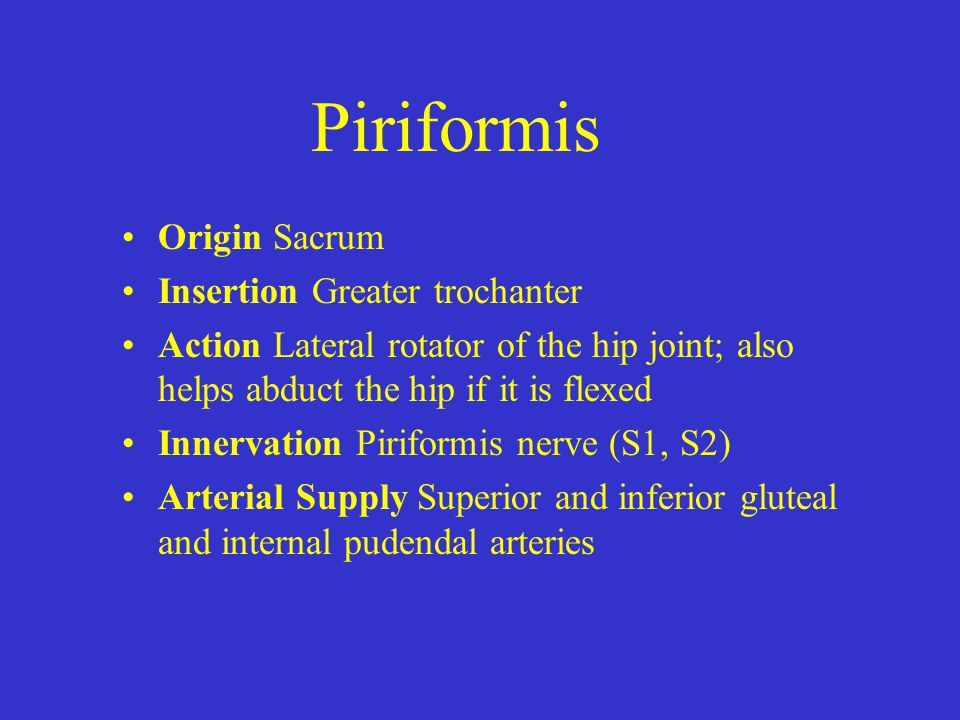 Piriformis Origin Sacrum Insertion Greater trochanter Action Lateral rotator of the hip joint; also helps abduct the hip if it is flexed Innervation P