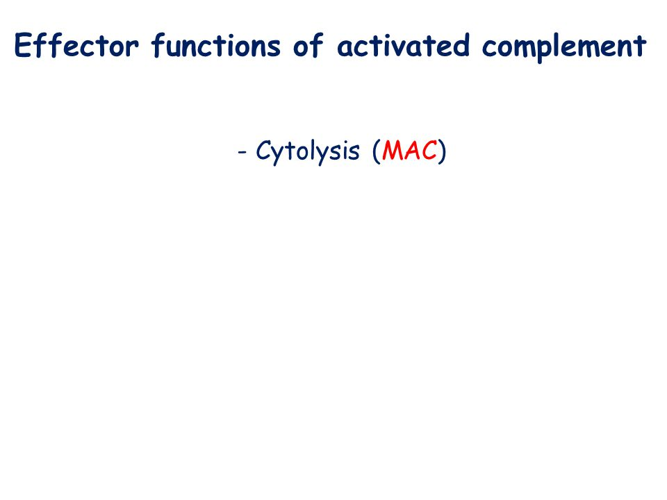 Effector functions of activated complement - Cytolysis (MAC)