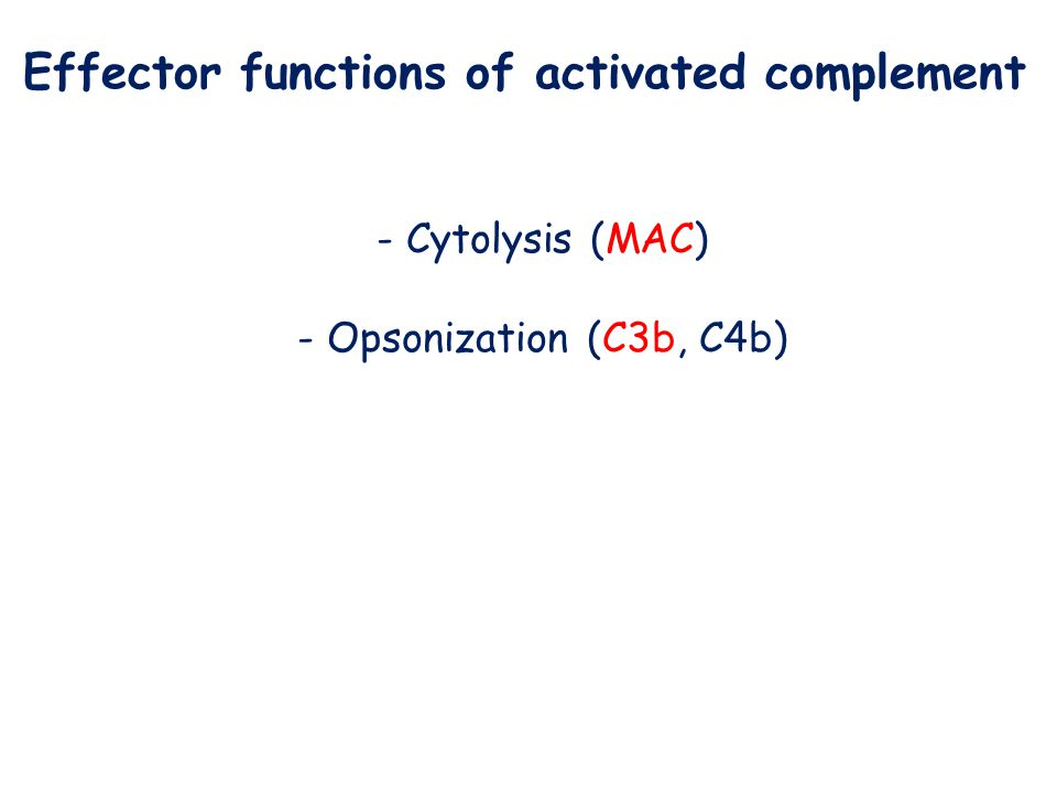 Effector functions of activated complement - Cytolysis (MAC) - Opsonization (C3b, C4b)