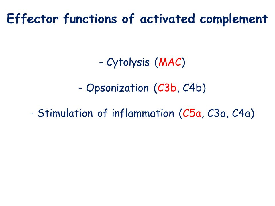 Effector functions of activated complement - Cytolysis (MAC) - Opsonization (C3b, C4b) - Stimulation of inflammation (C5a, C3a, C4a)