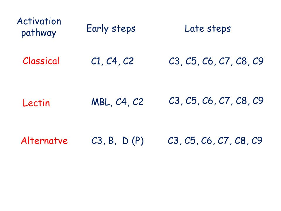 Classical Lectin Alternatve C1, C4, C2 Early stepsLate steps MBL, C4, C2 C3, B, D (P) C3, C5, C6, C7, C8, C9 Activation pathway
