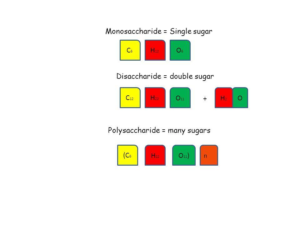 Monosaccharide = Single sugar Disaccharide = double sugar Polysaccharide = many sugars C6C6 H 12 O6O6 C 12 H 22 O 11 (C 6 H 22 O 11 ) n + H2H2 O