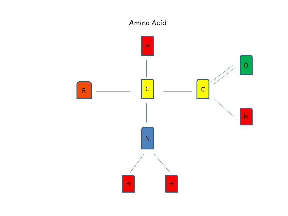 Amino Acid H R C C H N O HH