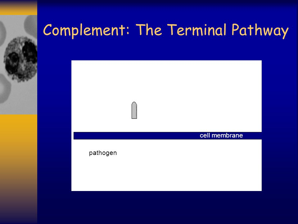 Complement: The Terminal Pathway pathogen cell membrane