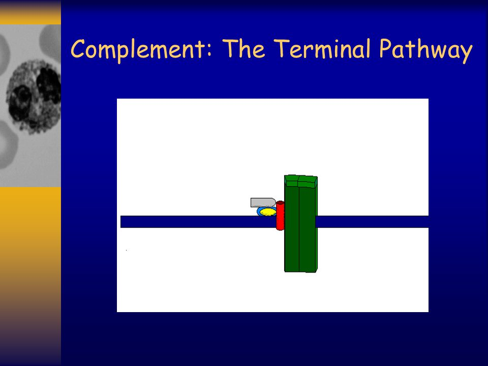 Complement: The Terminal Pathway