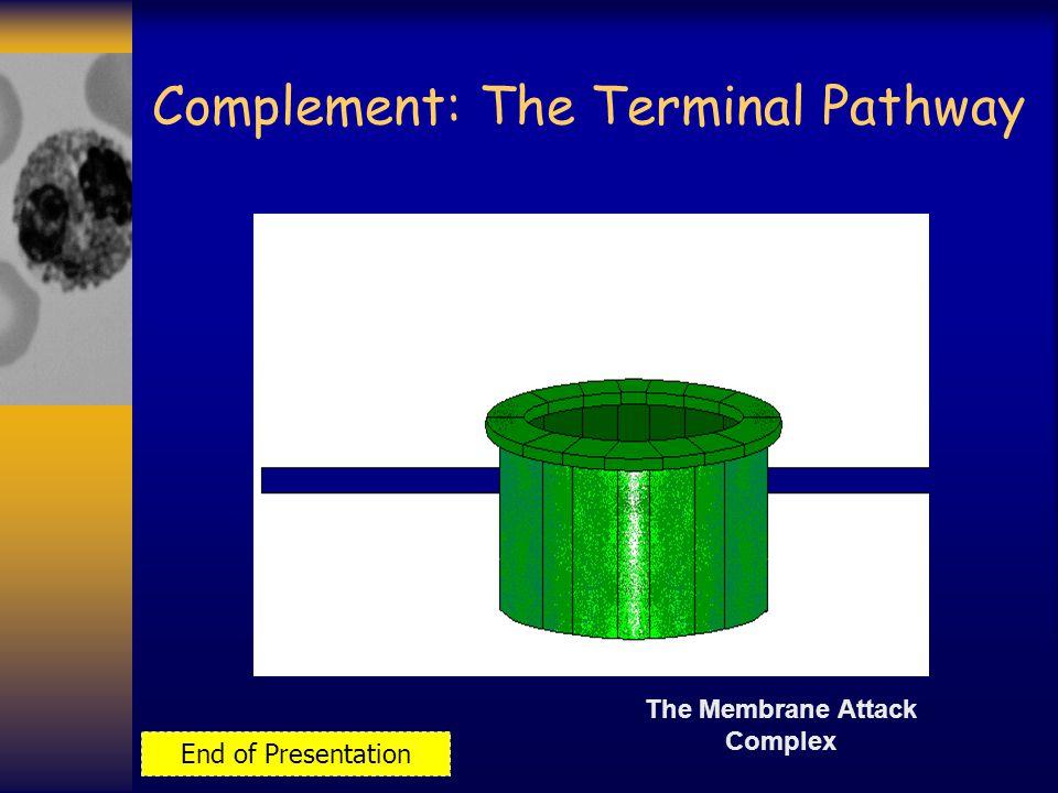 The Membrane Attack Complex End of Presentation