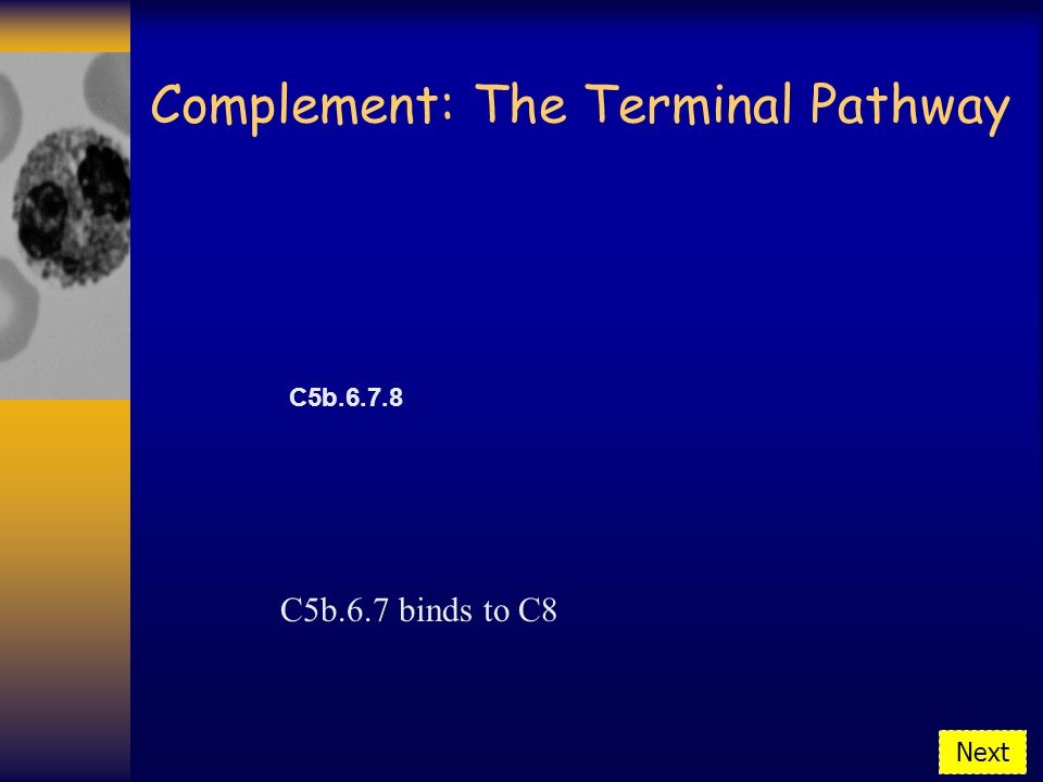 Complement: The Terminal Pathway C5b.6.7 binds to C8 Next C5b.6.7.8