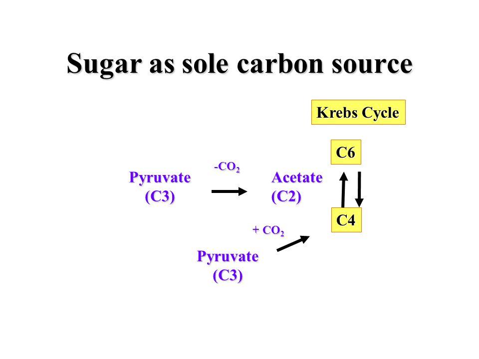 Sugar as sole carbon source Pyruvate (C3) (C3)Acetate(C2) -CO 2 C6 Krebs Cycle C4 Pyruvate (C3) (C3) + CO 2