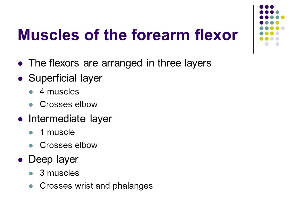 Muscles of the forearm flexor The flexors are arranged in three layers Superficial layer 4 muscles Crosses elbow Intermediate layer 1 muscle Crosses e