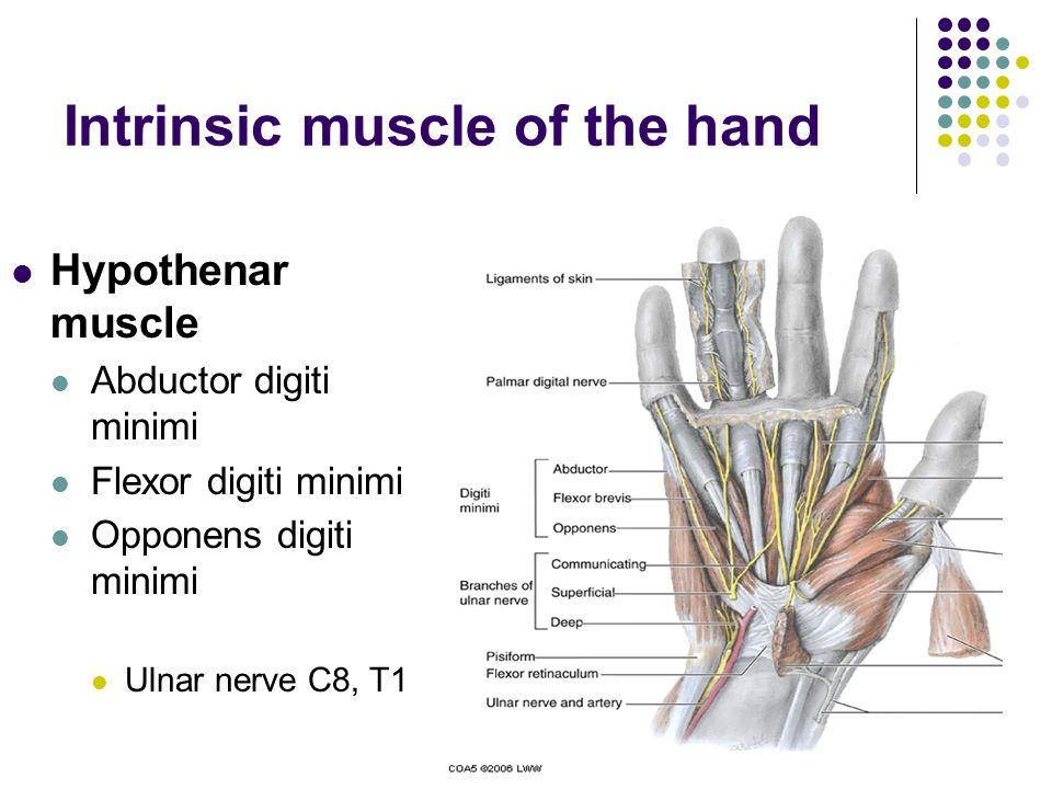 Intrinsic muscle of the hand Hypothenar muscle Abductor digiti minimi Flexor digiti minimi Opponens digiti minimi Ulnar nerve C8, T1