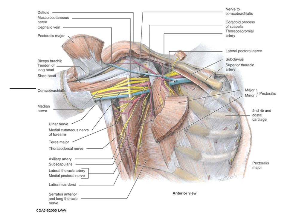 Brachial Plexus Injuries Injuries to the brachial plexus affects movement and cutaneous sensations in the upper limb.