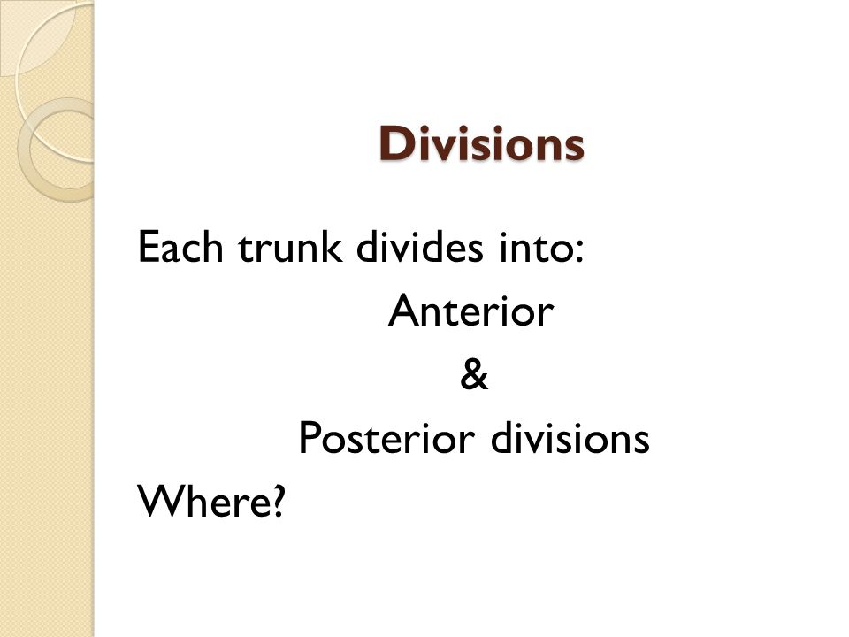 Divisions Each trunk divides into: Anterior & Posterior divisions Where?