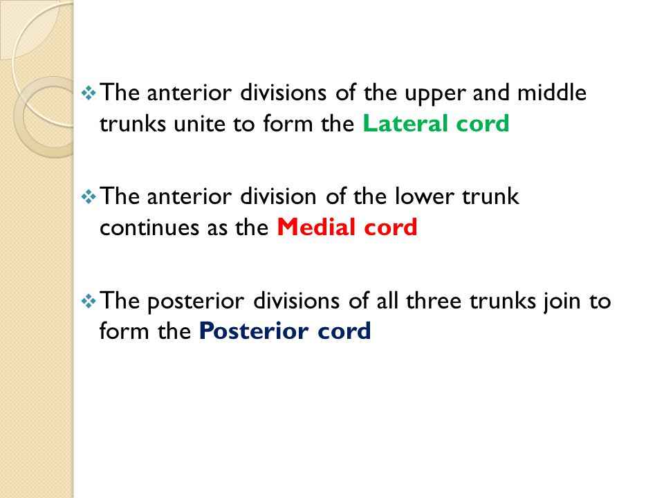  The anterior divisions of the upper and middle trunks unite to form the Lateral cord  The anterior division of the lower trunk continues as the Med