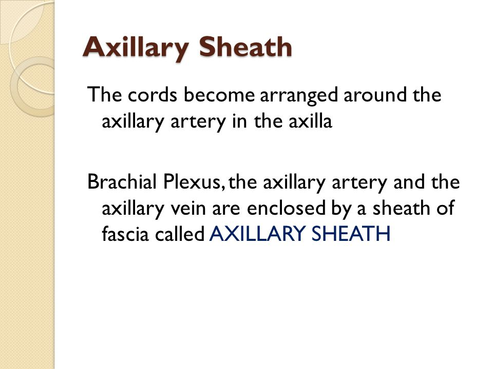 Axillary Sheath The cords become arranged around the axillary artery in the axilla Brachial Plexus, the axillary artery and the axillary vein are encl