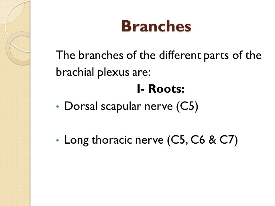 Branches The branches of the different parts of the brachial plexus are: I- Roots: Dorsal scapular nerve (C5) Long thoracic nerve (C5, C6 & C7)