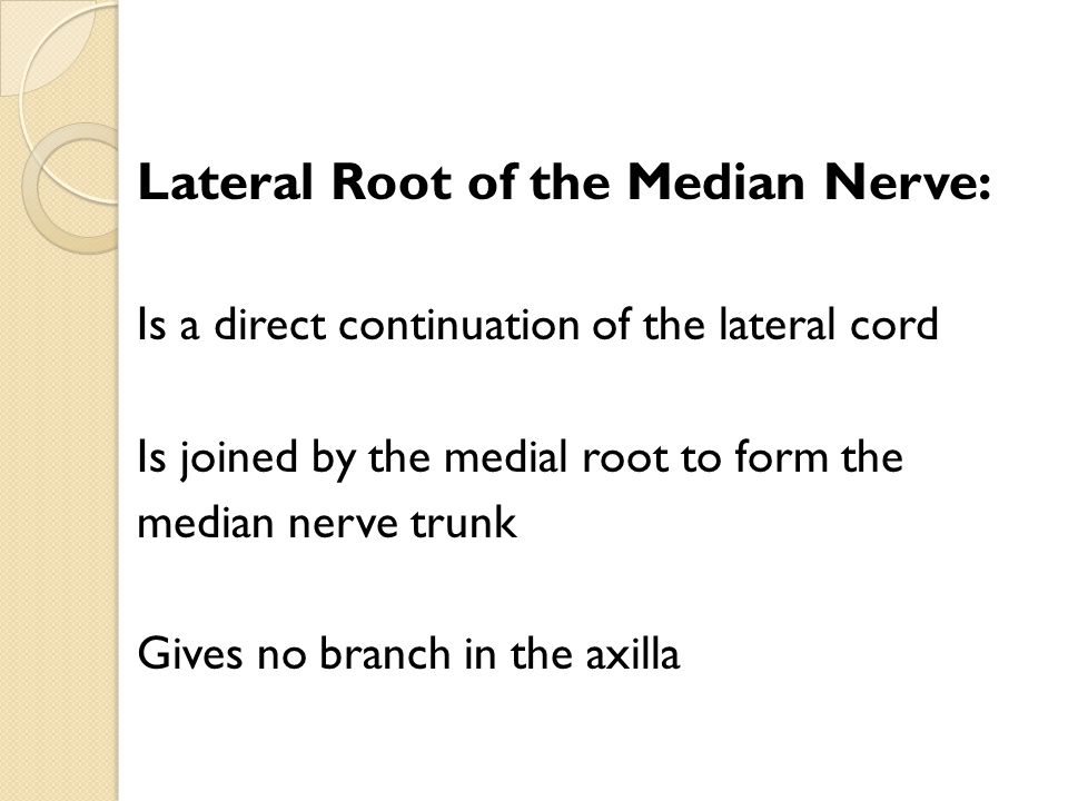 Lateral Root of the Median Nerve: Is a direct continuation of the lateral cord Is joined by the medial root to form the median nerve trunk Gives no br