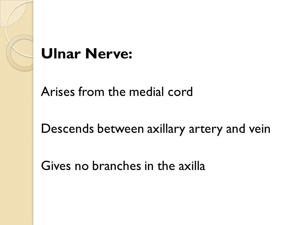 Ulnar Nerve: Arises from the medial cord Descends between axillary artery and vein Gives no branches in the axilla