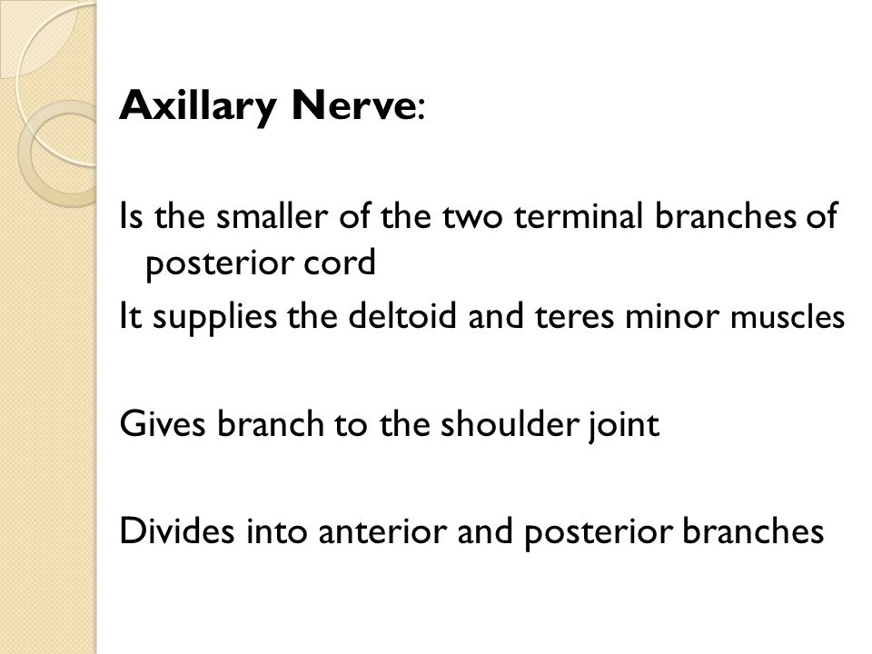 Axillary Nerve: Is the smaller of the two terminal branches of posterior cord It supplies the deltoid and teres minor muscles Gives branch to the shou