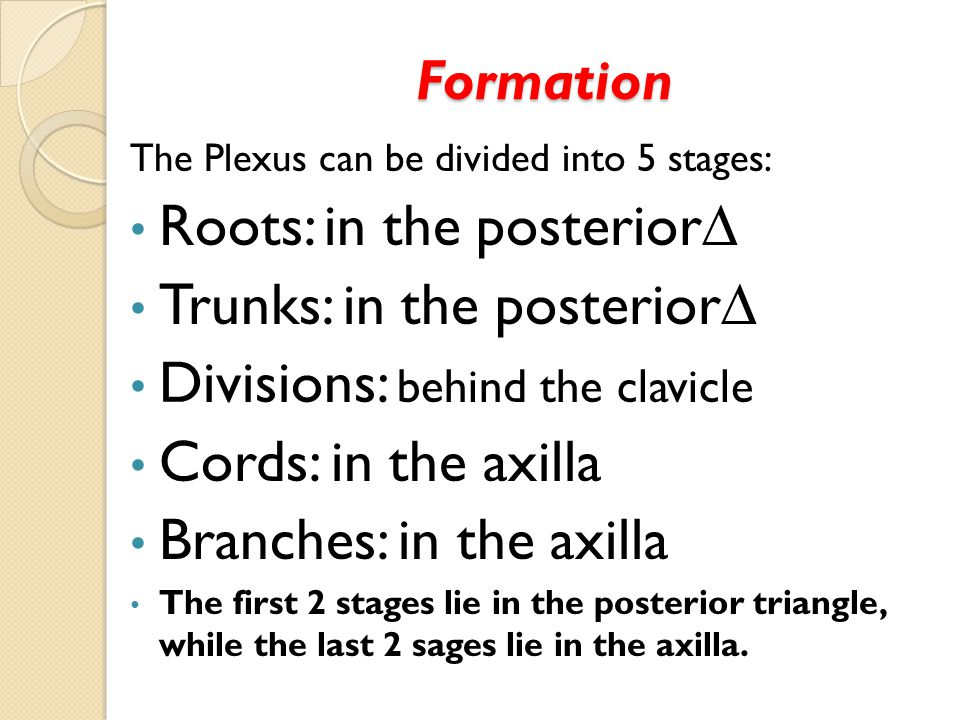 Formation The Plexus can be divided into 5 stages: Roots: in the posterior∆ Trunks: in the posterior∆ Divisions: behind the clavicle Cords: in the axi