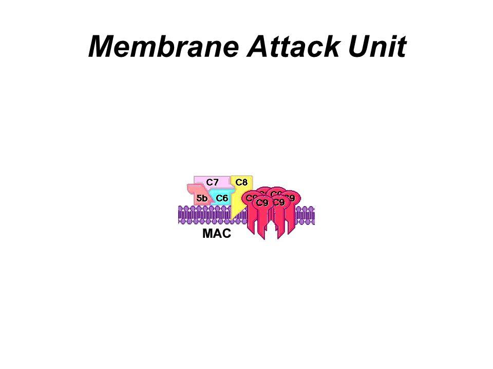 Membrane Attack Unit