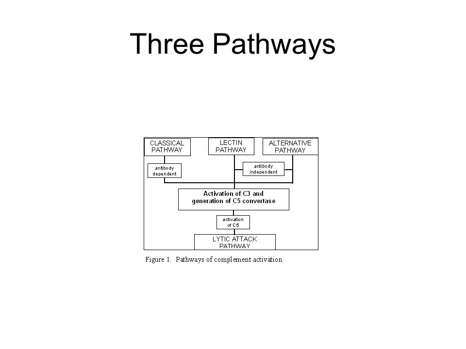Classical Pathway – C1: The Recognition Unit C1 consists of 3 subunits: C1q, C1r, and C1s.