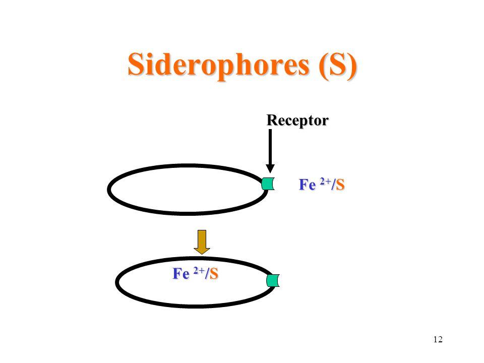 12 Siderophores (S) Fe 2+ /S Receptor