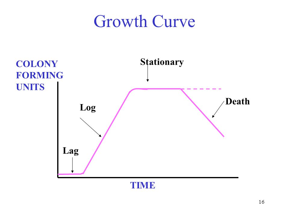 16 Growth Curve COLONY FORMING UNITS TIME Lag Log Stationary Death