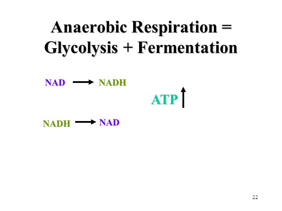 22 Anaerobic Respiration = Glycolysis + Fermentation NADNADH NADH NAD ATP