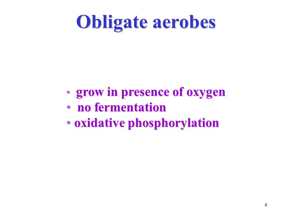 4 Obligate aerobes grow in presence of oxygen grow in presence of oxygen no fermentation no fermentation oxidative phosphorylation oxidative phosphorylation