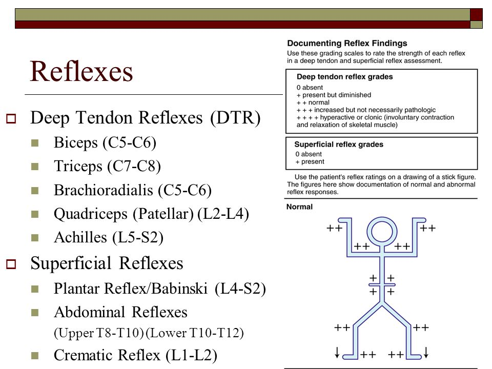 Reflexes  Deep Tendon Reflexes (DTR) Biceps (C5-C6) Triceps (C7-C8) Brachioradialis (C5-C6) Quadriceps (Patellar) (L2-L4) Achilles (L5-S2)  Superfic