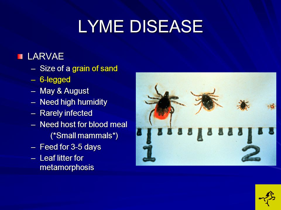 LYME DISEASE LARVAE –Size of a grain of sand –6-legged –May & August –Need high humidity –Rarely infected –Need host for blood meal (*Small mammals*) (*Small mammals*) –Feed for 3-5 days –Leaf litter for metamorphosis