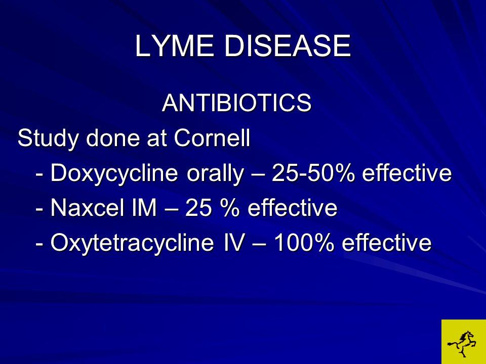 ANTIBIOTICS Study done at Cornell - Doxycycline orally – 25-50% effective - Naxcel IM – 25 % effective - Oxytetracycline IV – 100% effective