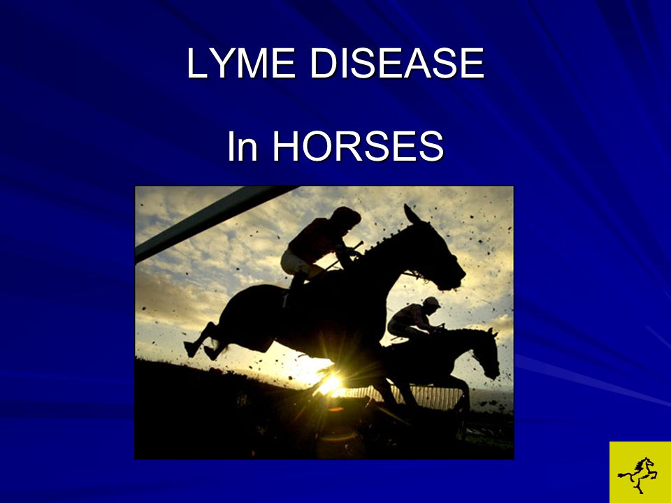 The chances of your horse in the northeast being infected with Lyme disease may be 25 times greater than horses in other parts of the country.