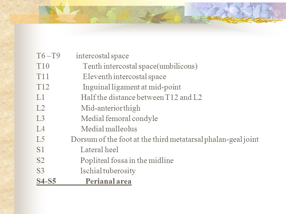 T6 –T9 intercostal space T10 Tenth intercostal space(umbilicous) T11 Eleventh intercostal space T12 Inguinal ligament at mid-point L1 Half the distanc