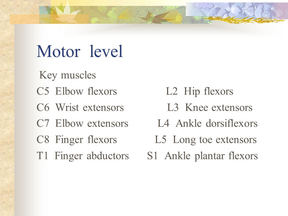 Muscle power 0=total paralysis 1=palpable or visible contraction 2=active movement, gravity eliminated 3=active movement, against gravity 4=active movement, against some resistance 5=active movement, against full resistance