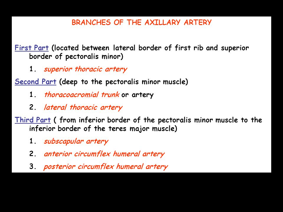 BRANCHES OF THE AXILLARY ARTERY First Part (located between lateral border of first rib and superior border of pectoralis minor) 1.superior thoracic artery Second Part (deep to the pectoralis minor muscle) 1.thoracoacromial trunk or artery 2.lateral thoracic artery Third Part ( from inferior border of the pectoralis minor muscle to the inferior border of the teres major muscle) 1.subscapular artery 2.anterior circumflex humeral artery 3.posterior circumflex humeral artery