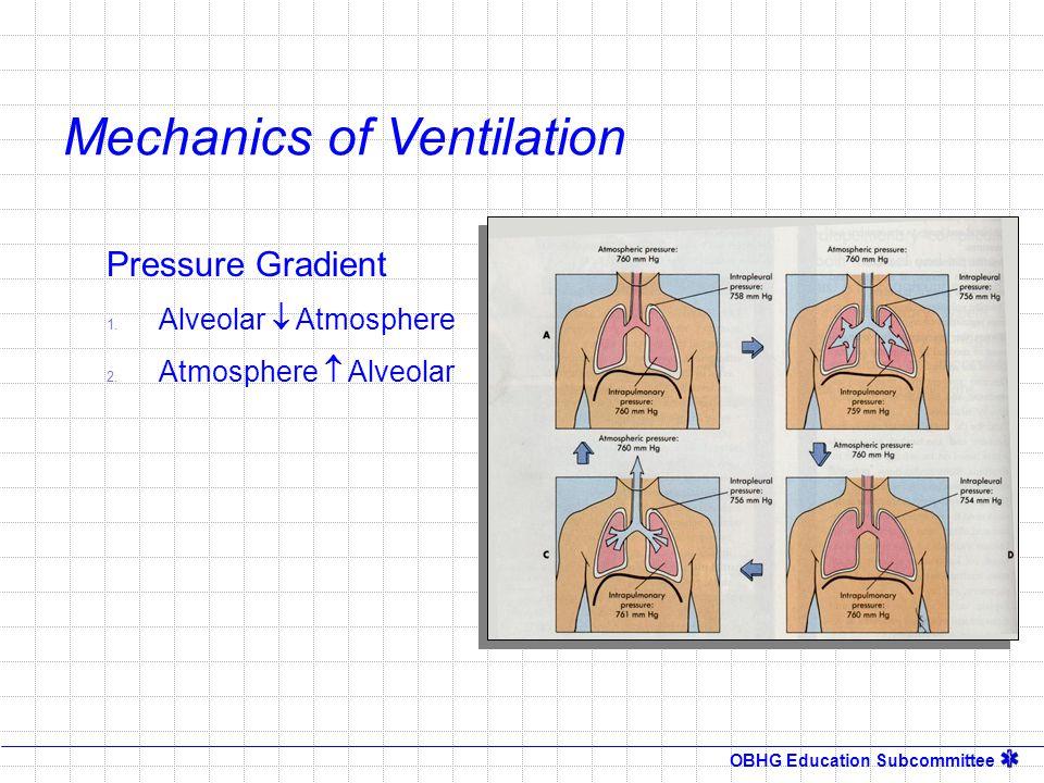 OBHG Education Subcommittee Pressure Gradient 1. Alveolar  Atmosphere 2. Atmosphere  Alveolar Mechanics of Ventilation