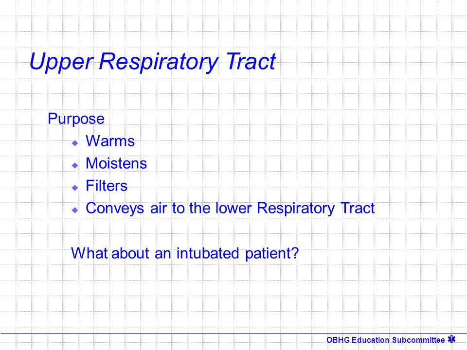 OBHG Education Subcommittee Upper Respiratory Tract Purpose  Warms  Moistens  Filters  Conveys air to the lower Respiratory Tract What about an in