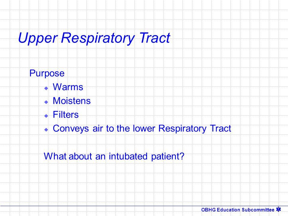OBHG Education Subcommittee  Nasal Cavity Upper Respiratory Tract