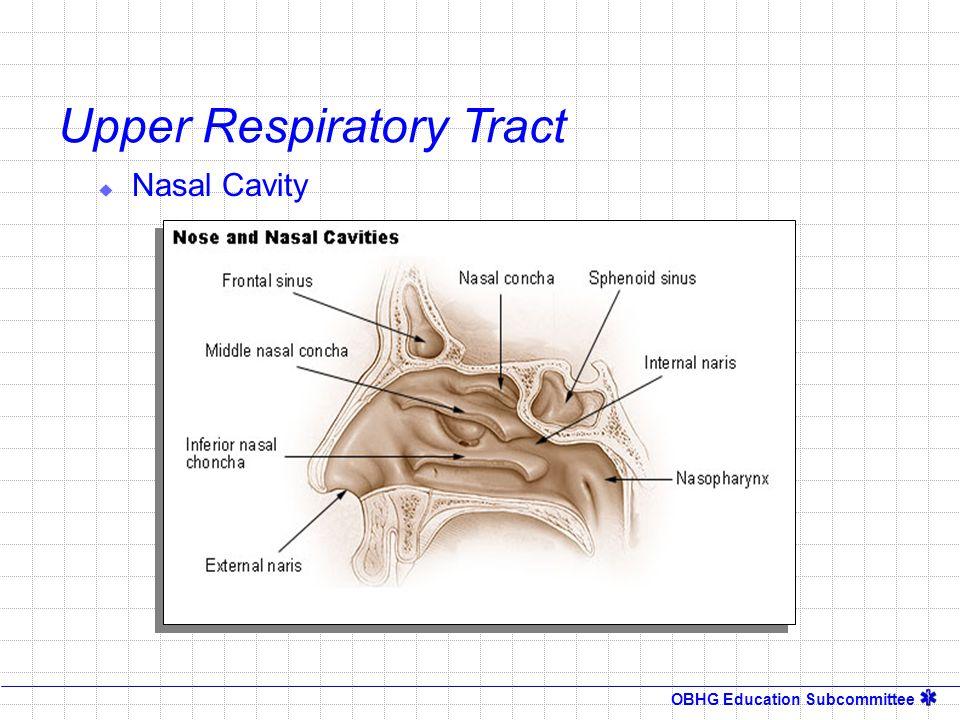 OBHG Education Subcommittee V/Q Ratios V/Q > 1 V/Q = 1 V/Q <1 Blood Flow < 6 l/m Respiratory Volume < 6 l/m Blood Flow = 6 l/m Respiratory Volume = 6 l/m Respiratory Volume = 6 l/m Blood Flow = 6 l/m