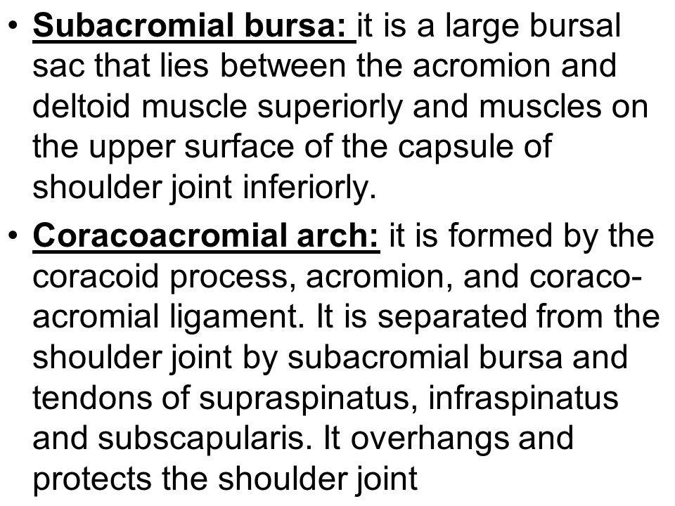 Subacromial bursa: it is a large bursal sac that lies between the acromion and deltoid muscle superiorly and muscles on the upper surface of the capsu