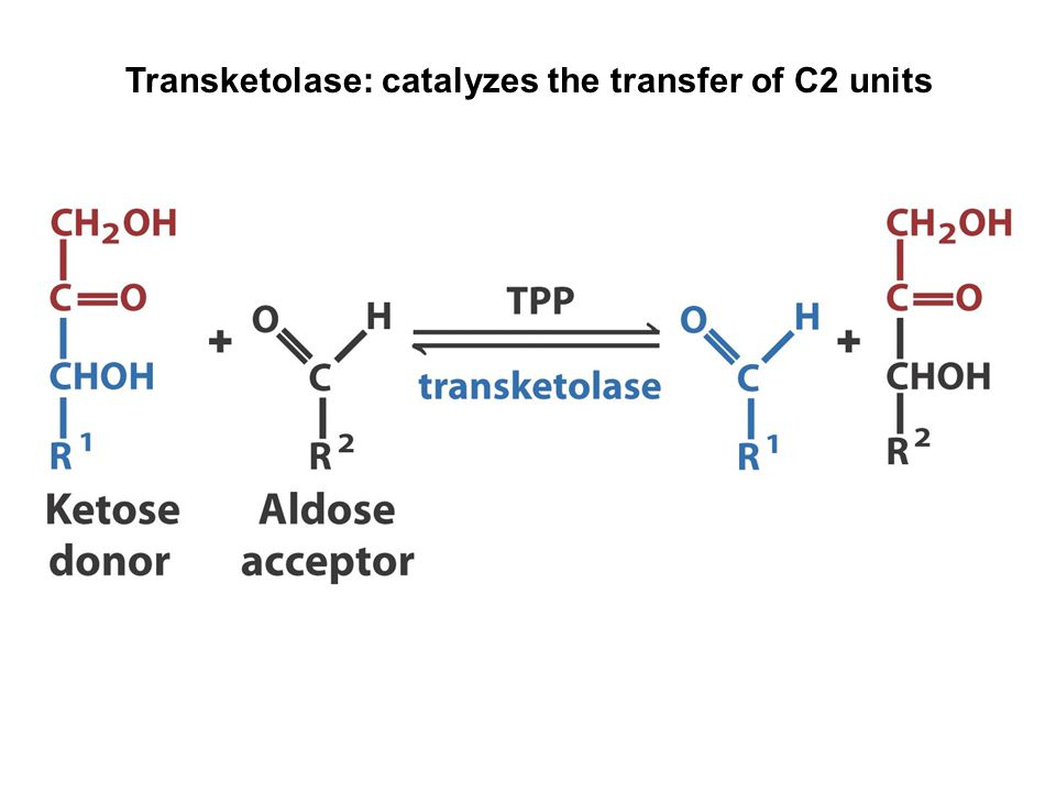 Transketolase: catalyzes the transfer of C2 units