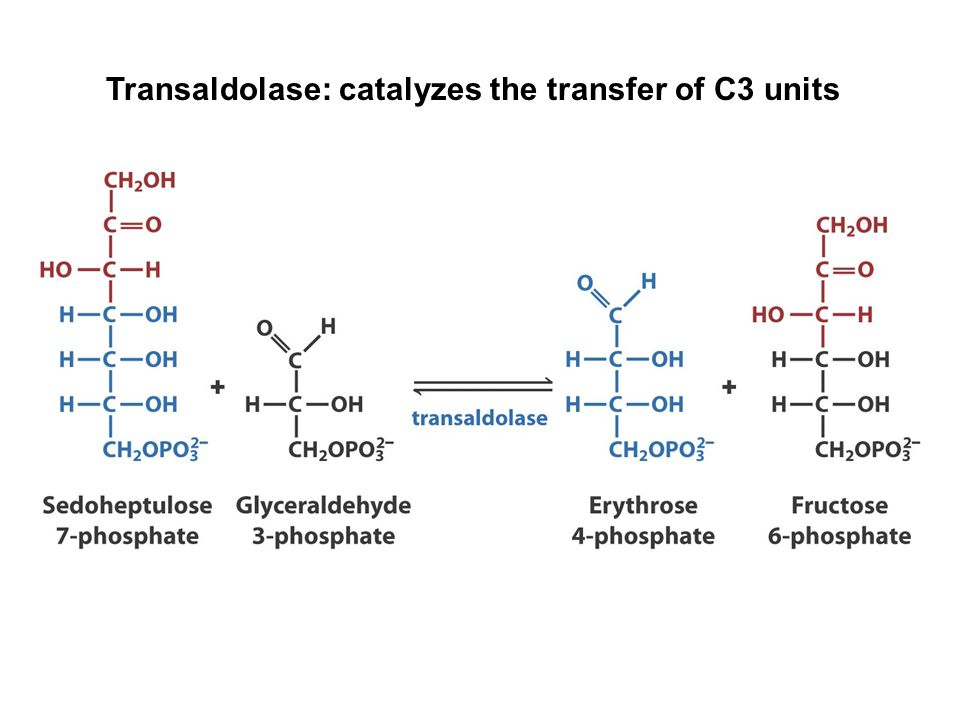 Transaldolase: catalyzes the transfer of C3 units